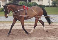 Pessoa Training System