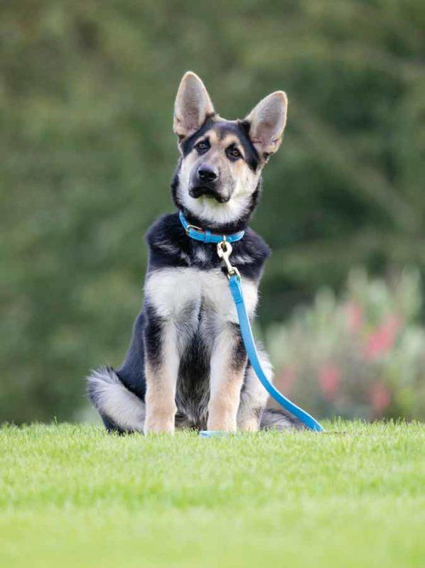 Dog Leads & Collars